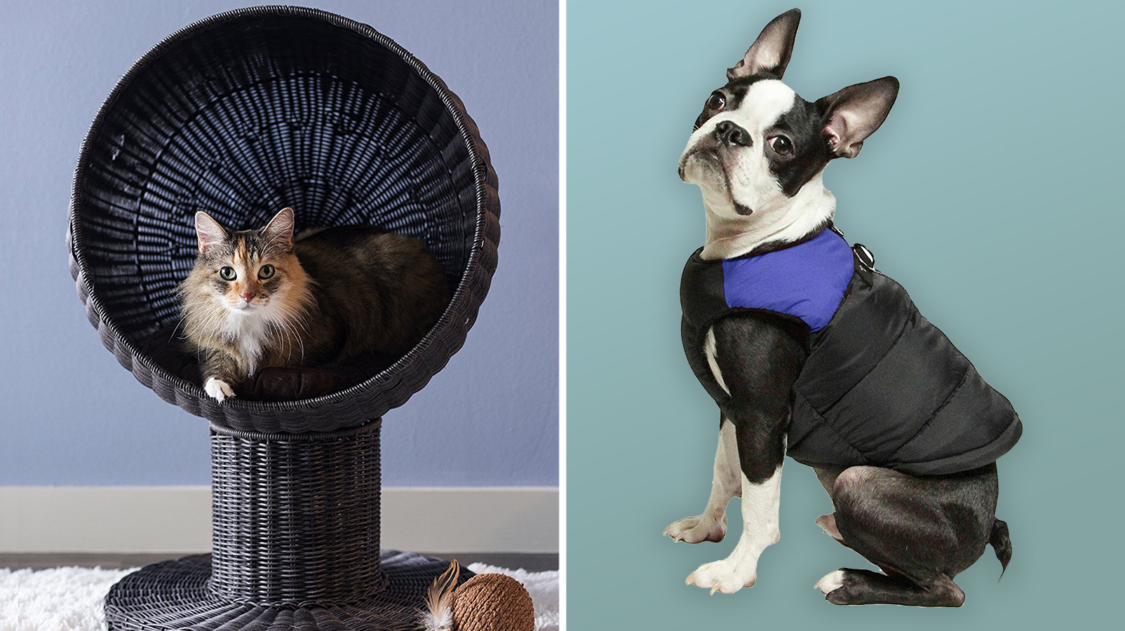 The 19 Best Holiday Gifts for Proud Pet Parents