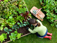 gardening-weight-loss