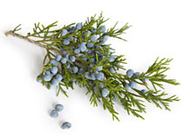 juniper-berry-brine-turkey