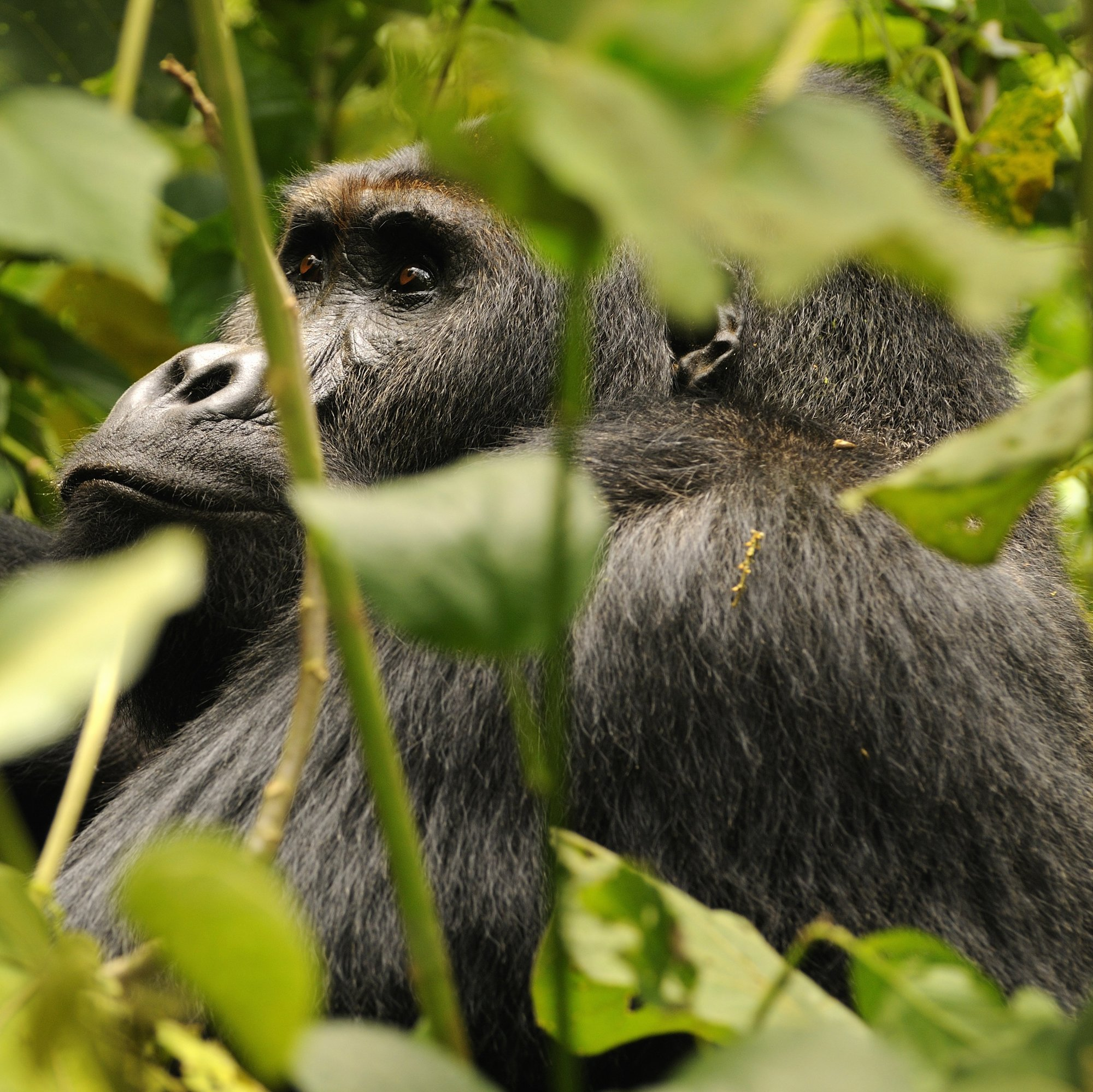 Scientists Warn of 'Eleventh Hour' for Many Primate Species