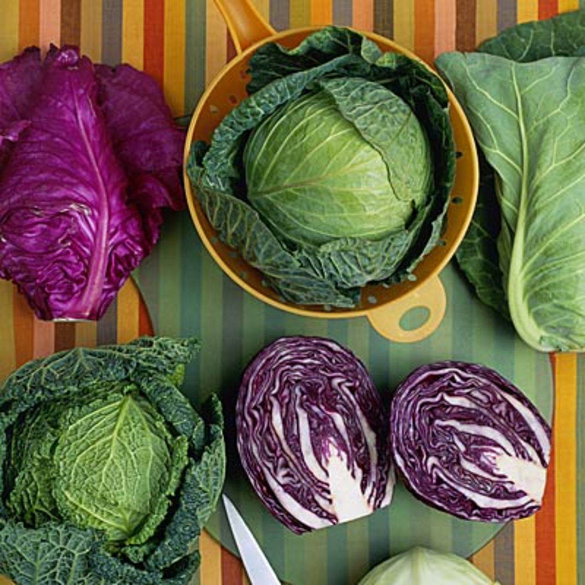 Quick cabbage recipes easy