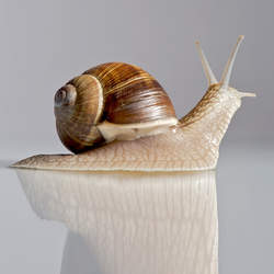 best snail skincare products