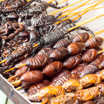 insects-food-eat