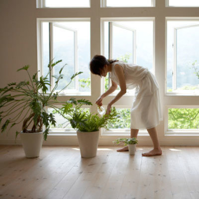 Healthiest plants for your home - Plants for every room in your home extra comfort and health ...