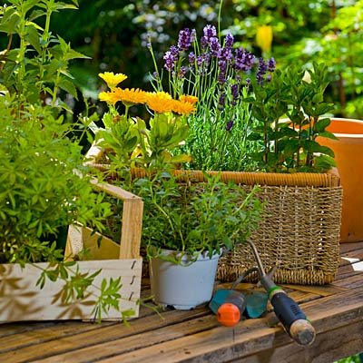 8 must have gardening tools for Gardening tools must have
