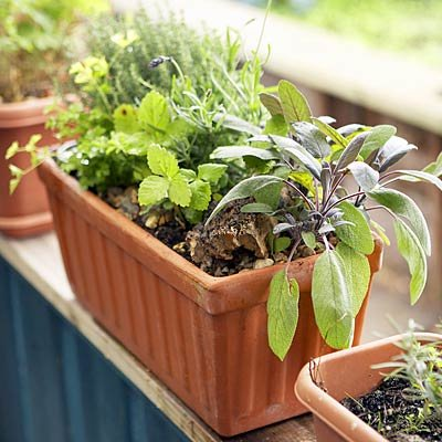 the best herbs to grow and eat at home. Black Bedroom Furniture Sets. Home Design Ideas