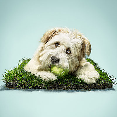 pets for health dog