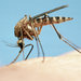 Everything You Must Know About Mosquitoes This Summer