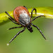 You Found a Tick. Now What?
