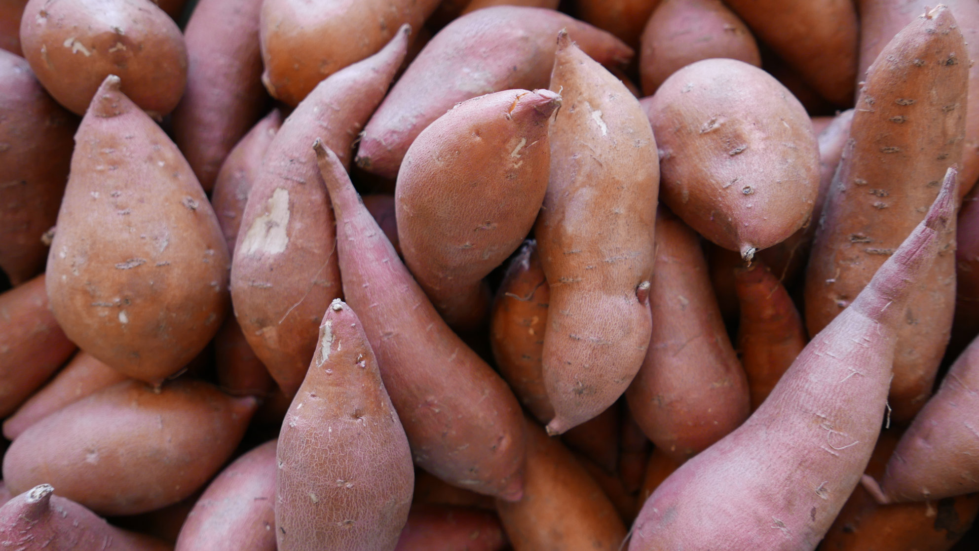 yams-sweet-potato-group