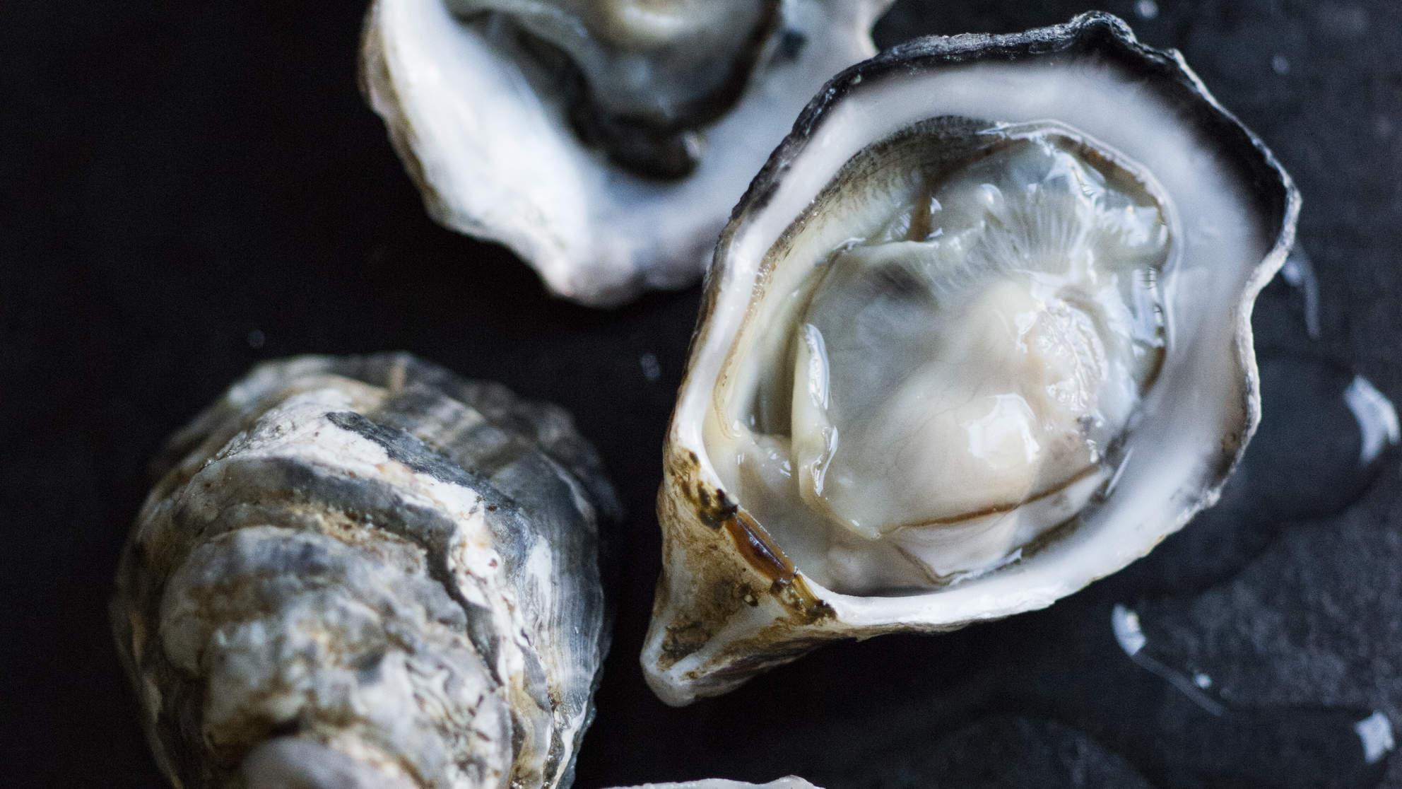 What benefits do oysters have for sex