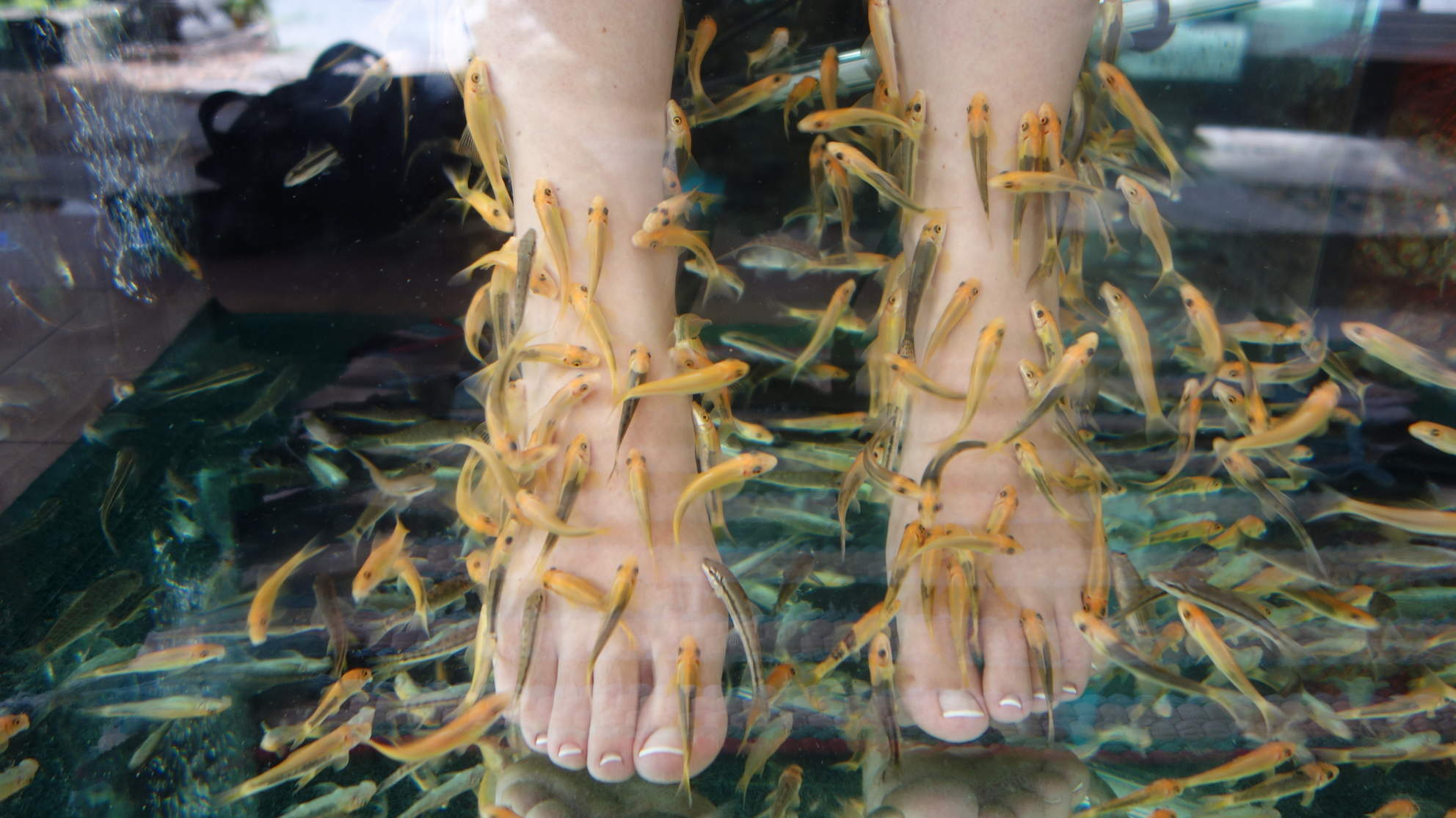A Fish Pedicure Caused a Woman's Toenails to Stop Growing and Fall Off, According to Her Doctor