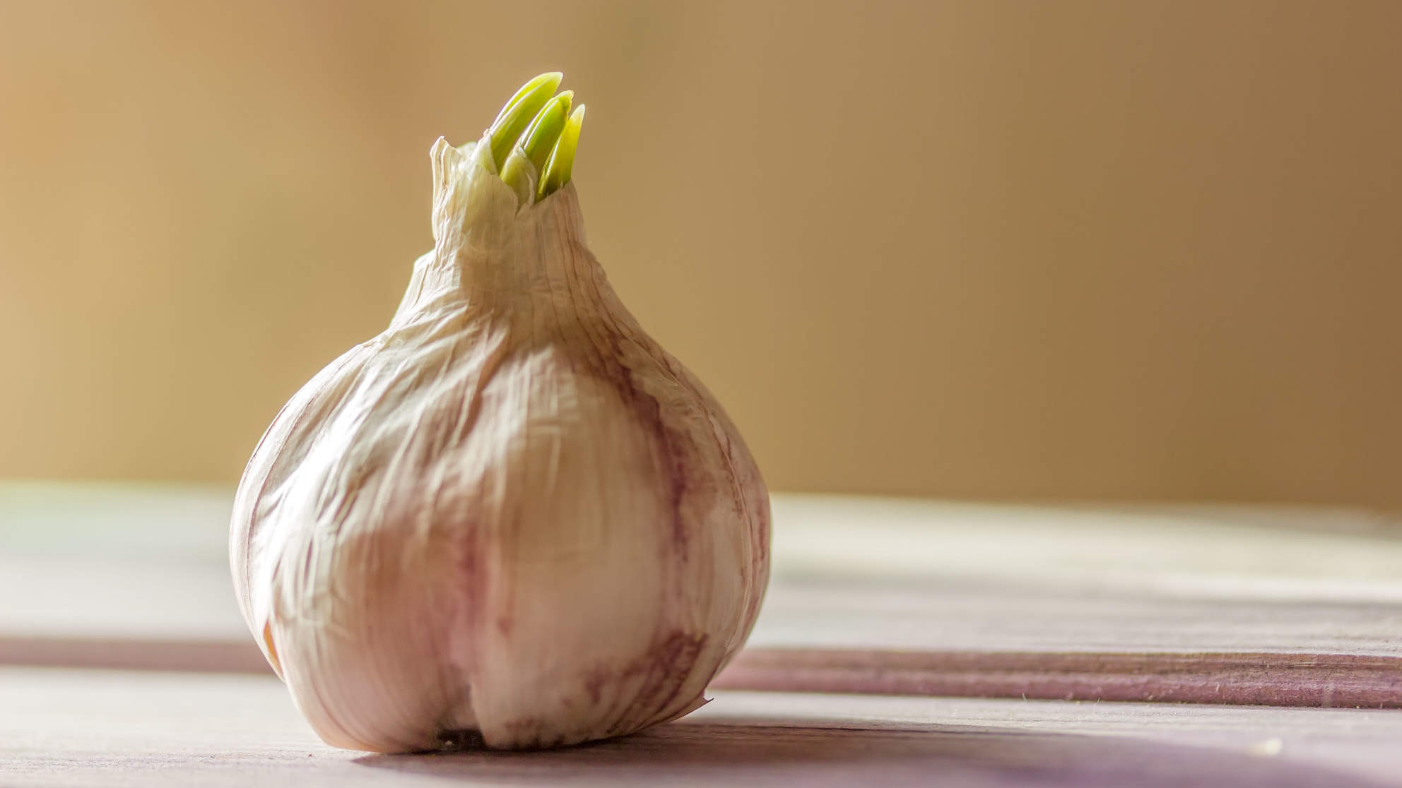 Is It Ever OK To Cook With Sprouted Garlic?