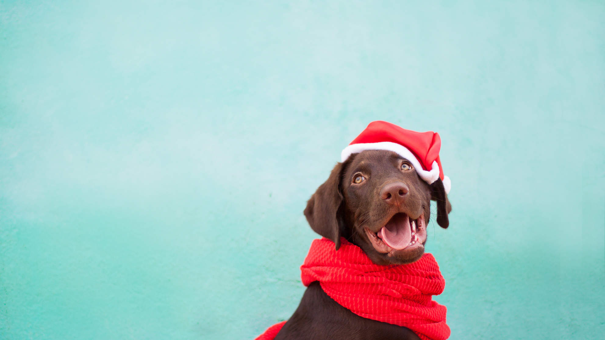 Dog Owners Should Be on High Alert for Chocolate Poisoning Over the Holidays, Vets Warn