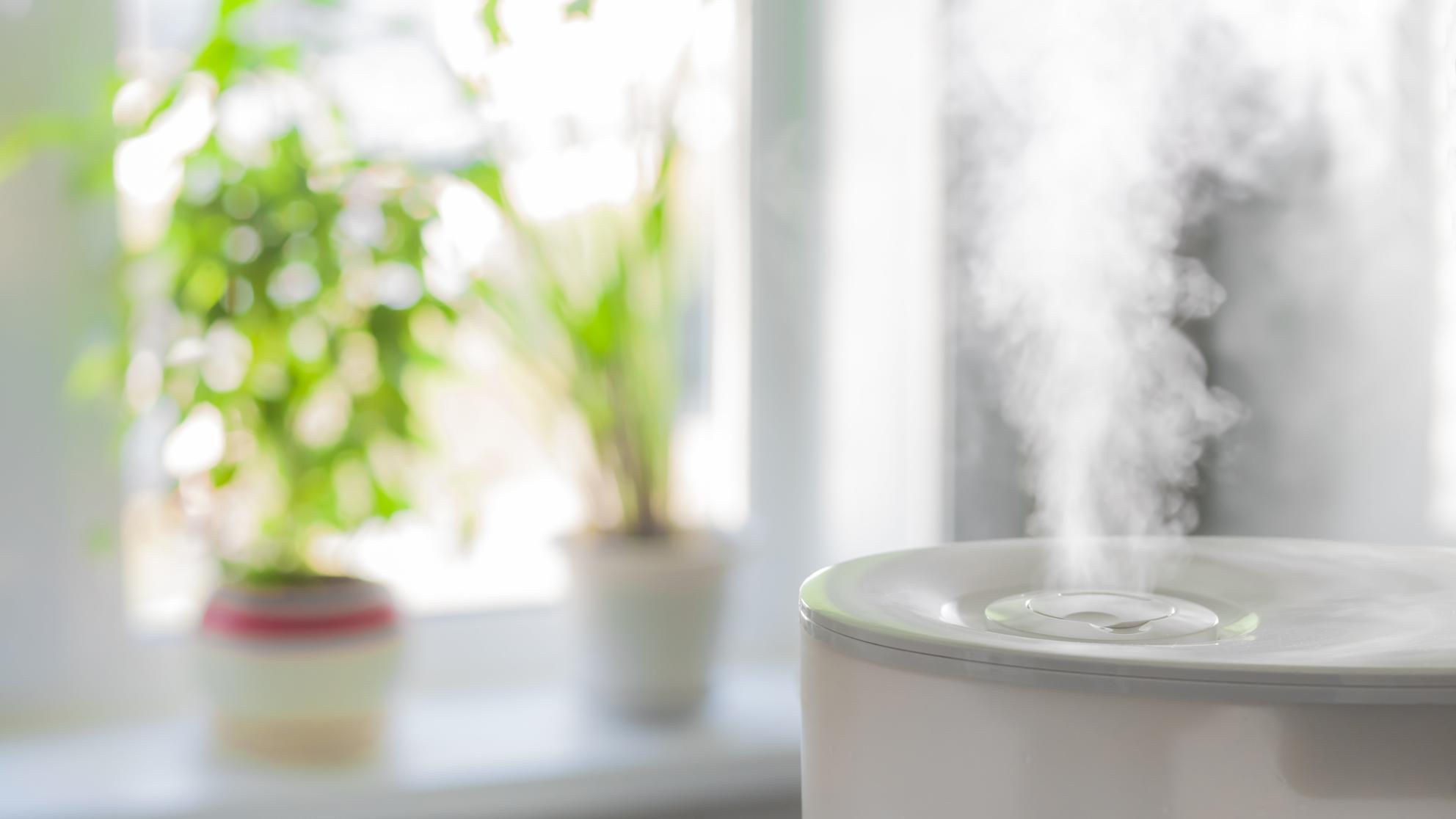 The Creepy Truth About Humidifiers