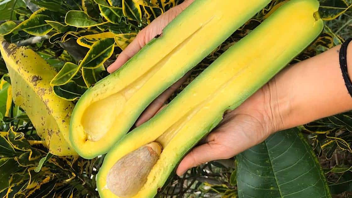 These Rare Avocados Are Going Viral on Instagram—and You Can Actually Buy Them