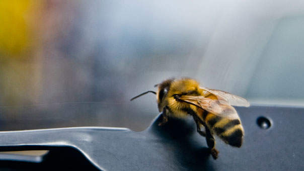 4 Tips for Treating a Bee Sting