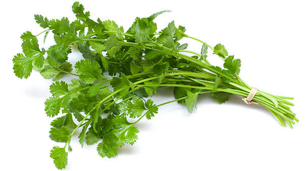 There Might Be Poop on Your Cilantro