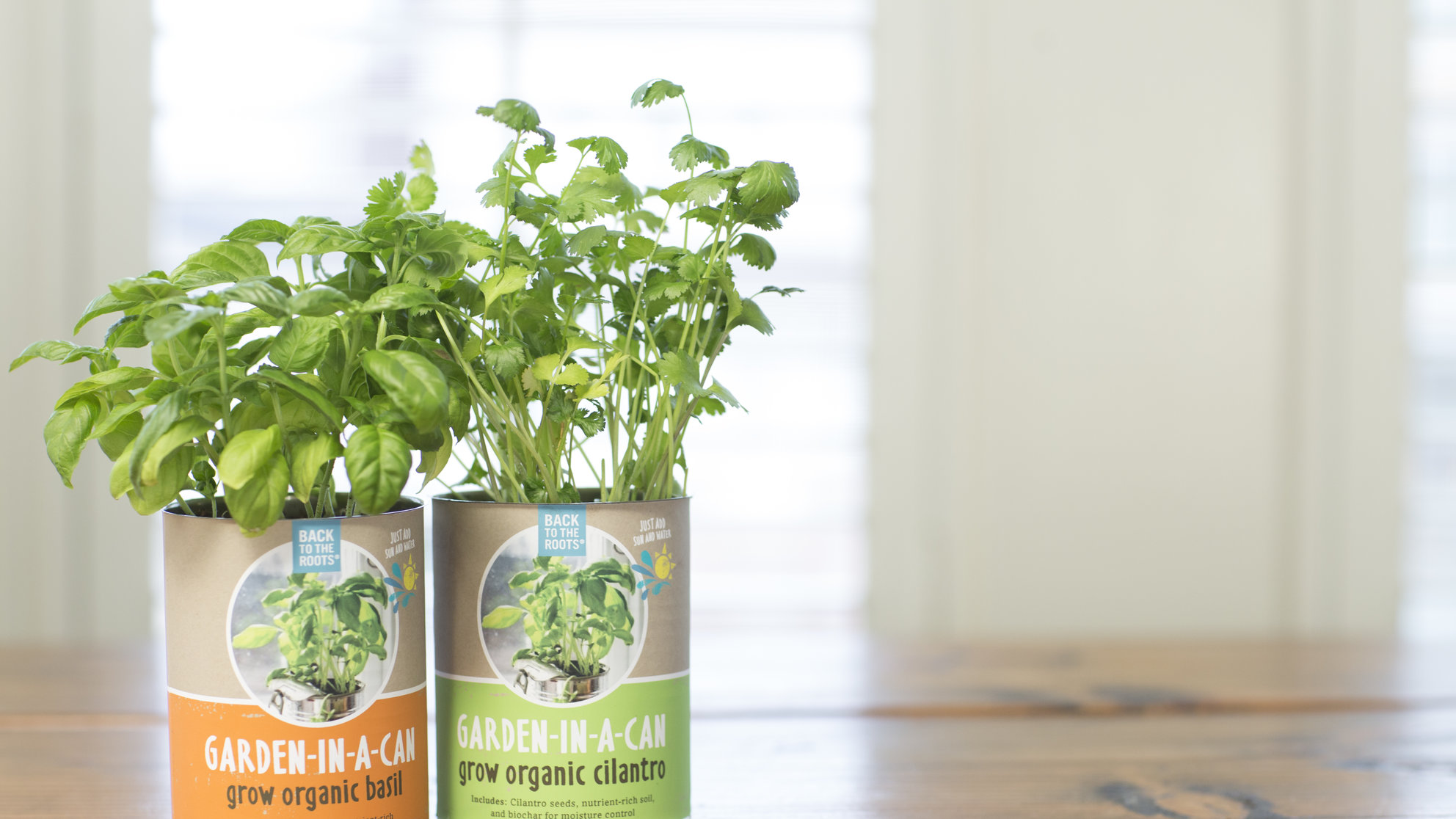 3 Fun, Easy Ways to Grow Your Own Food in Your Kitchen