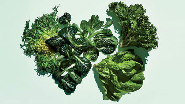 fresh-greens-lettuce1.jpg