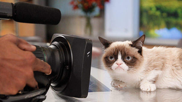 Grumpy Cat Fans Rejoice: Watching Cat Videos May Actually Be Good for You