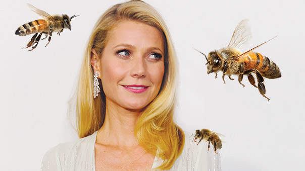 gwenyth-paltrow-bee.jpg
