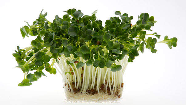 Small But Mighty: Everything You Need to Know About Microgreens