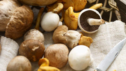 5 Surprising Facts About Mushrooms