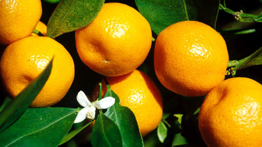 oranges-makes-you-clean.jpg
