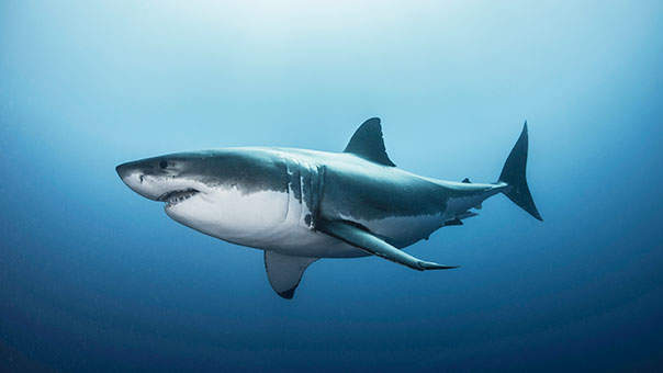 Does Swimming During Your Period Make You Shark Bait?