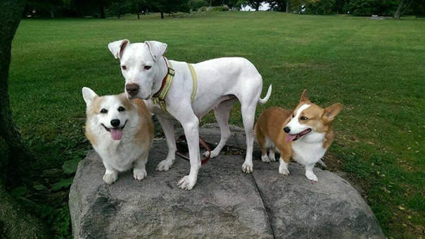 photo-doggies-for-anthony.jpg