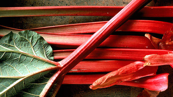 rhubarb-vegetable.jpg