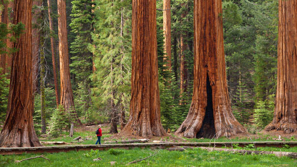 The Laughable Reasons Why Some People Don't Like Stunning National Parks