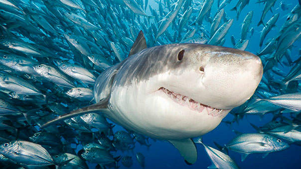 Why There's Been a Scary Rise in Shark Attacks This Summer