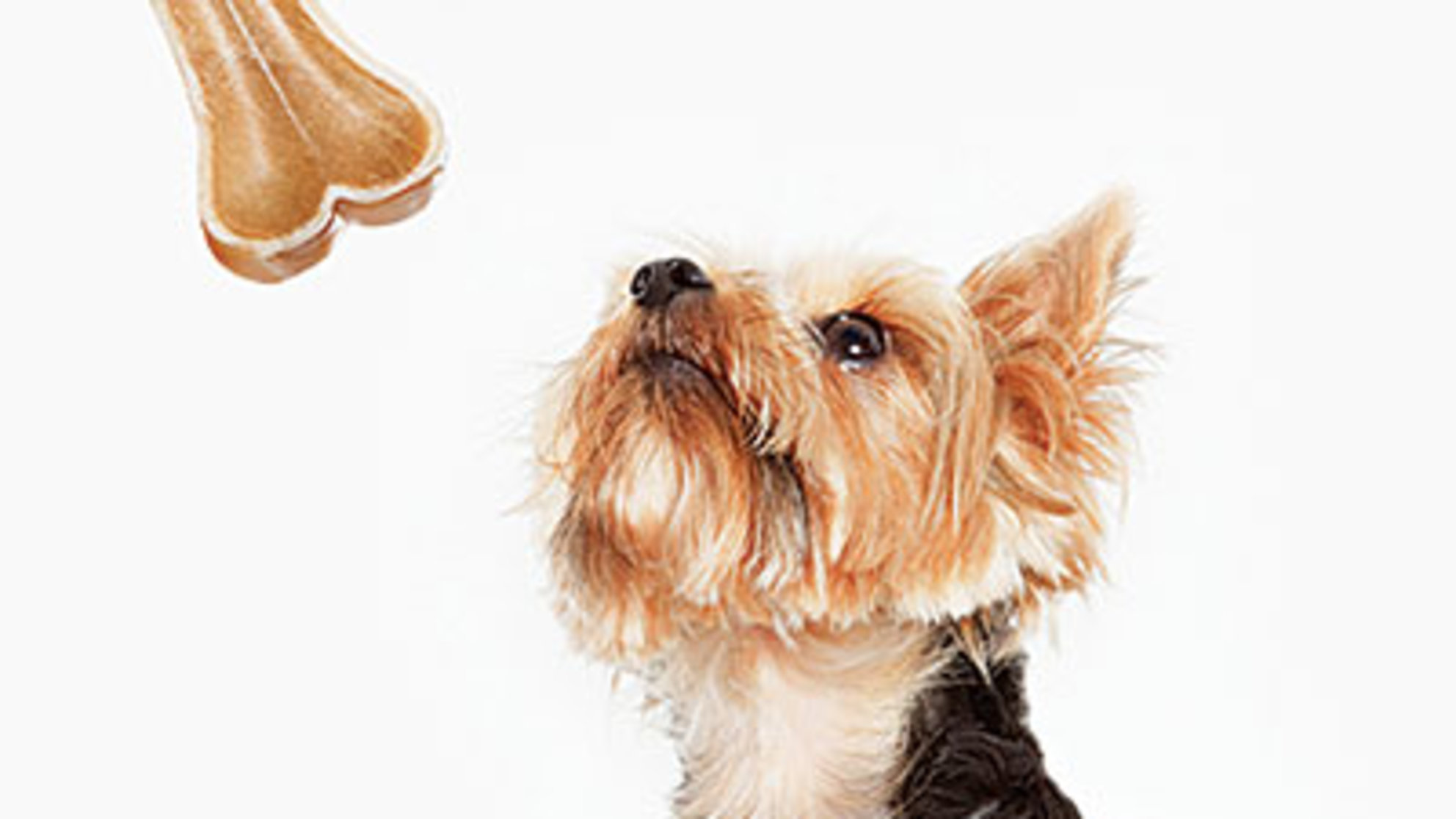 4 Ways to Get Slim With Your Pet