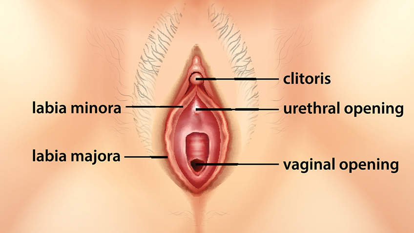 Clitoris size unusual