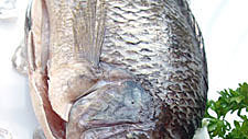 Fishing for Facts: Tilapia