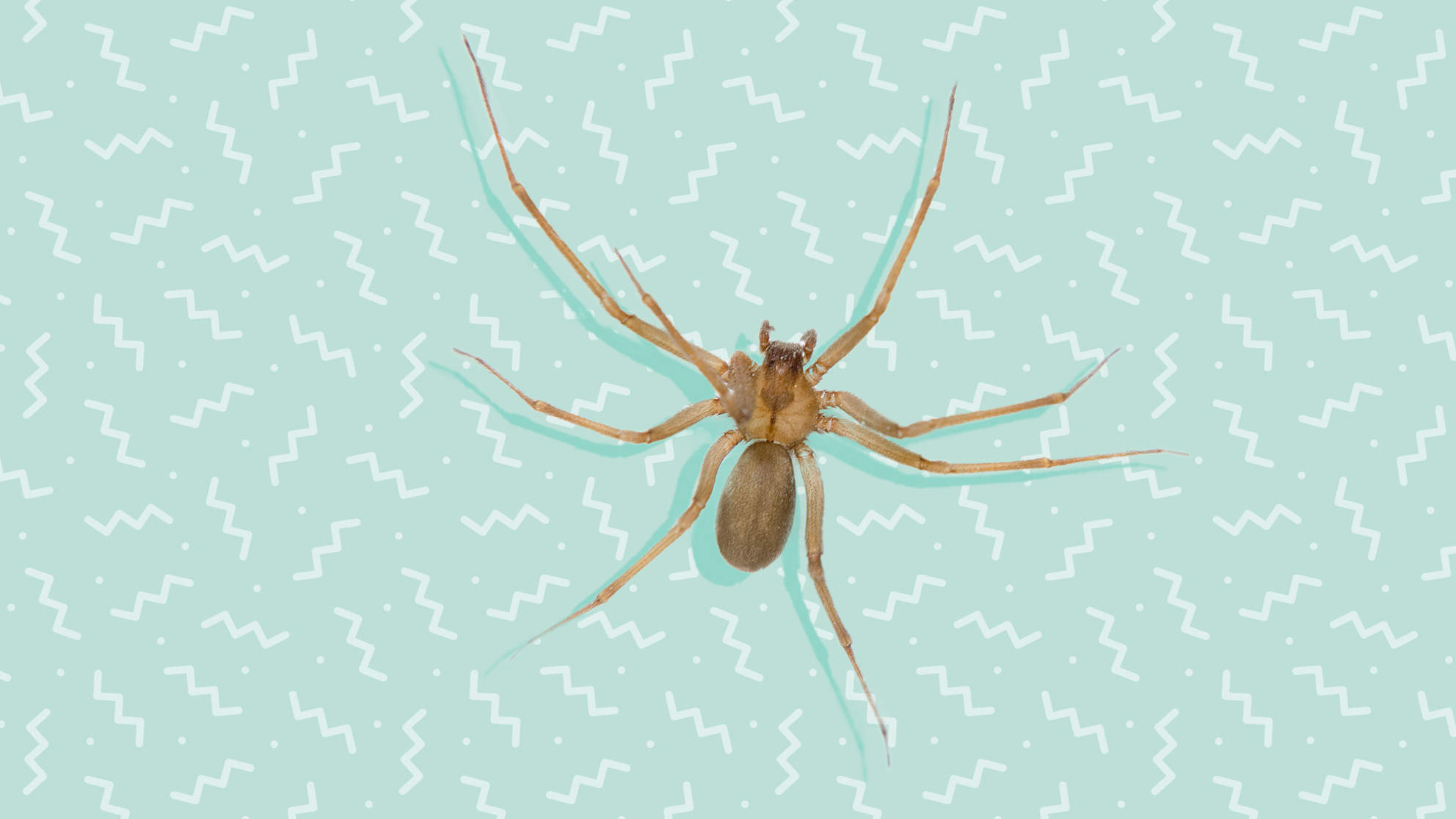 Doctors Find Brown Recluse Spider in Woman's Ear After She Complains of 'Swooshing' Sound