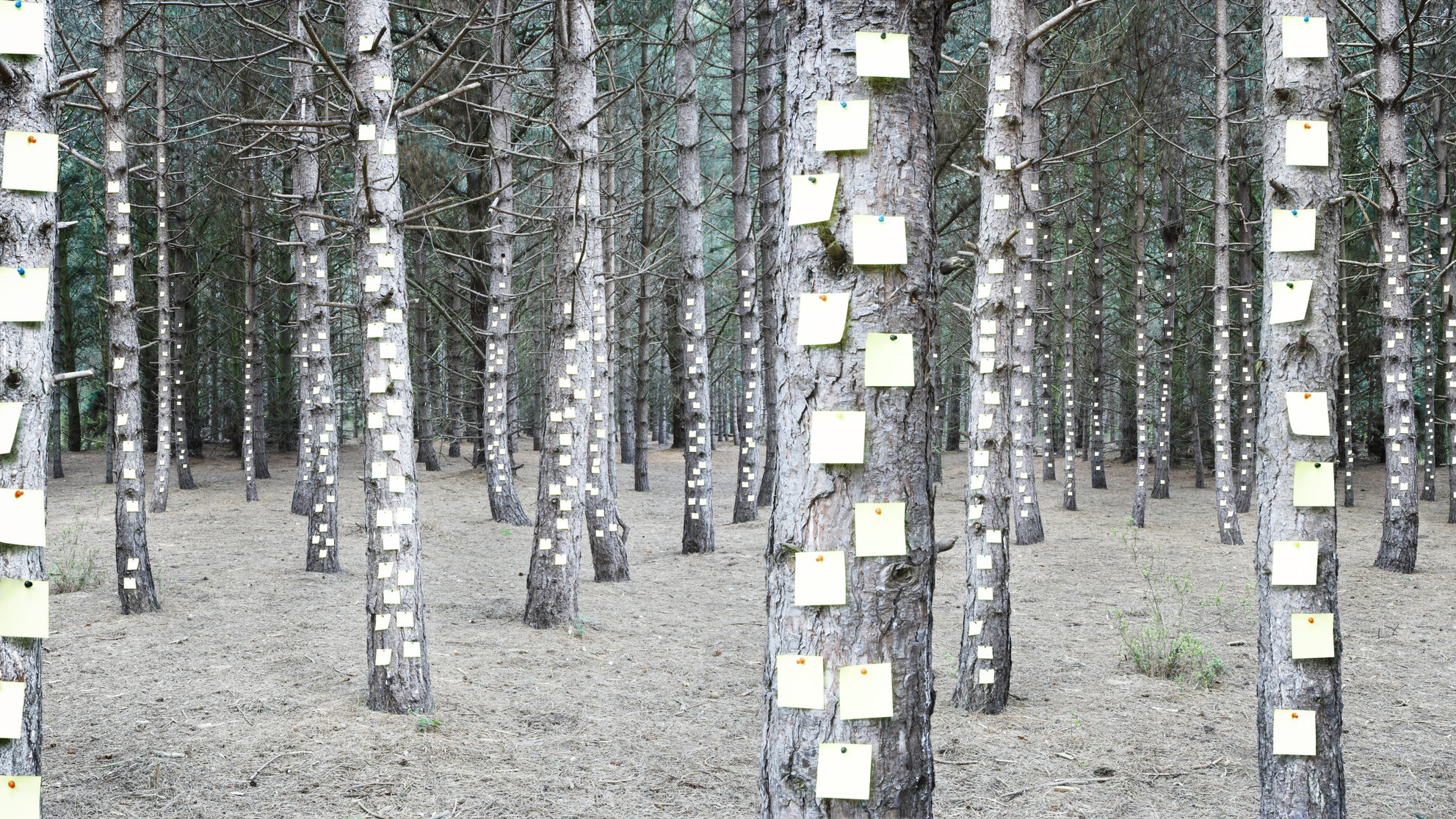 alzheimer-memory-post-it-notes-trees-forest