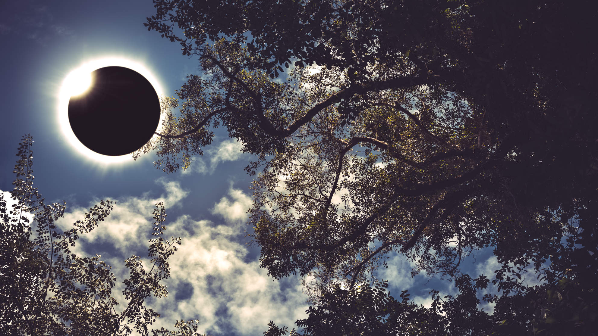 solar-eclipse-sky-trees