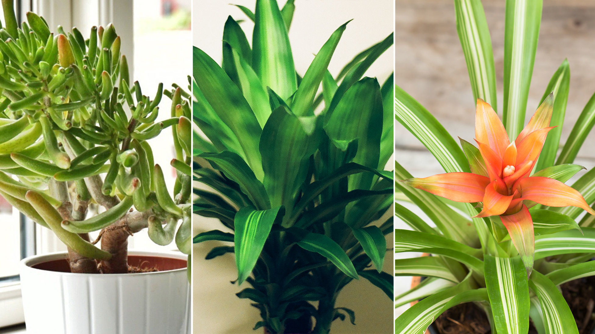 What kind of house plants smell unpleasant