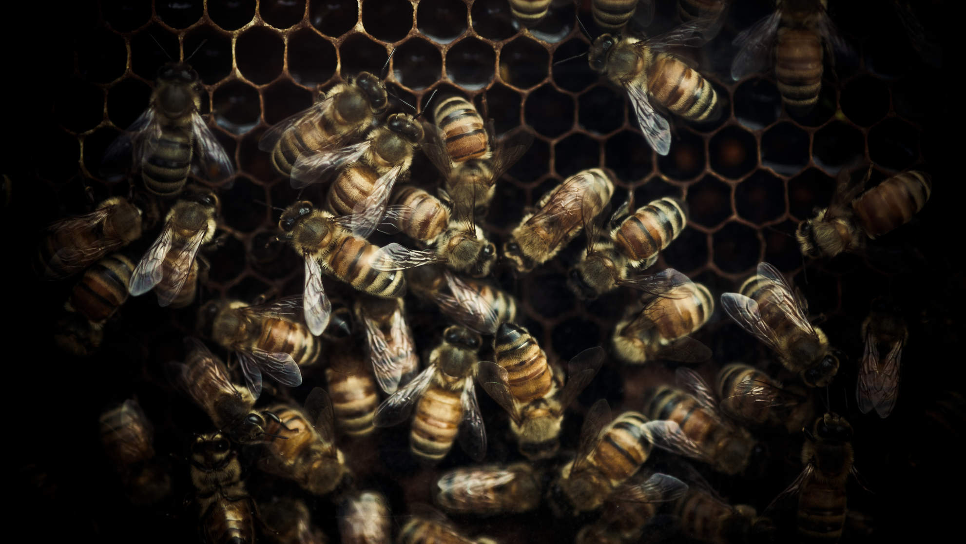 Woman In Critical Condition After Being Stung Over 200 Times by Africanized Bees