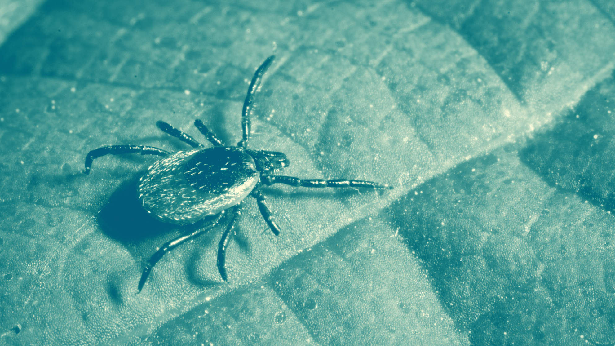 What Is Powassan Virus? This Tick-borne Illness Can Cause Fatal Swelling of the Brain