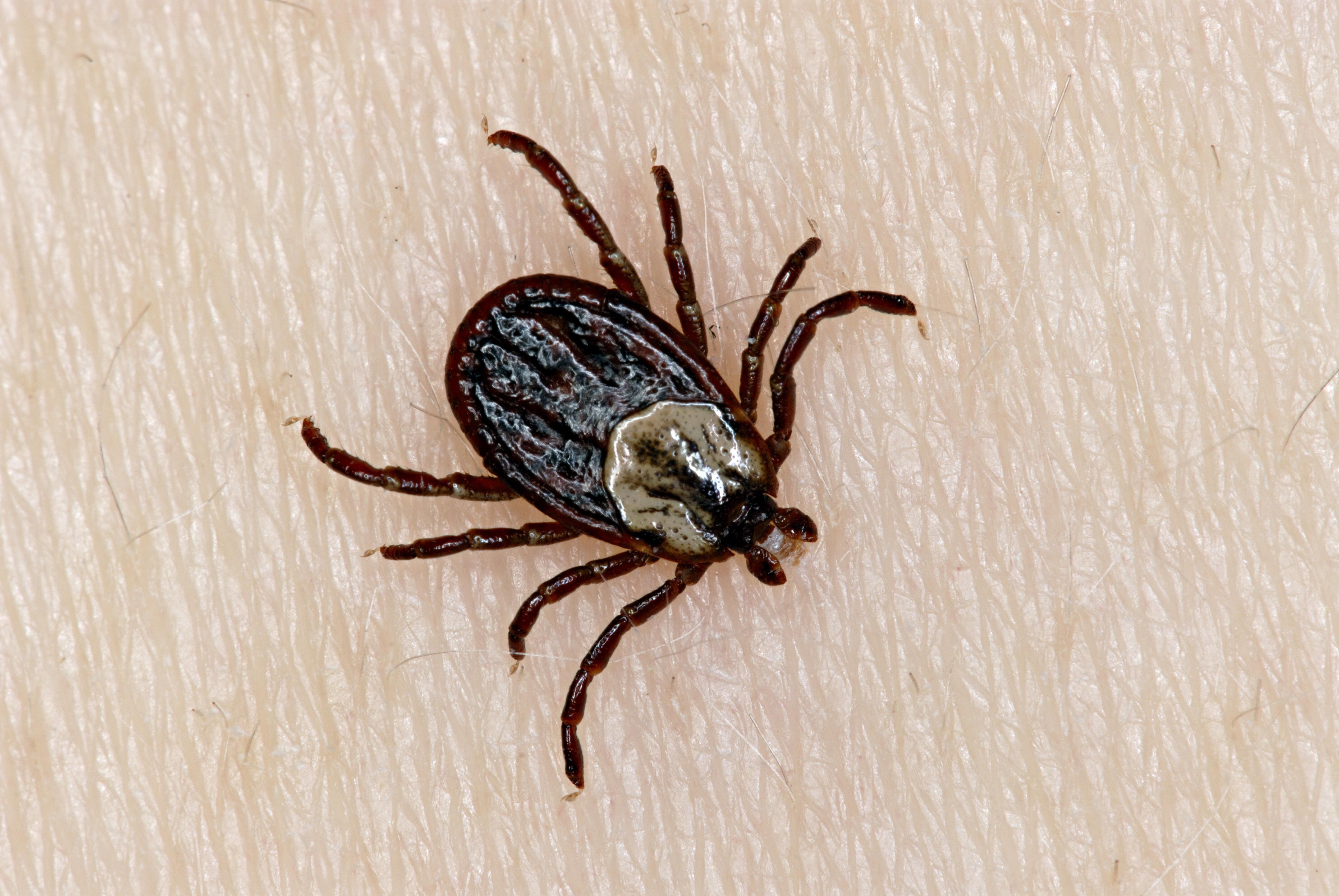 pictures of ticks - HD 1400×788