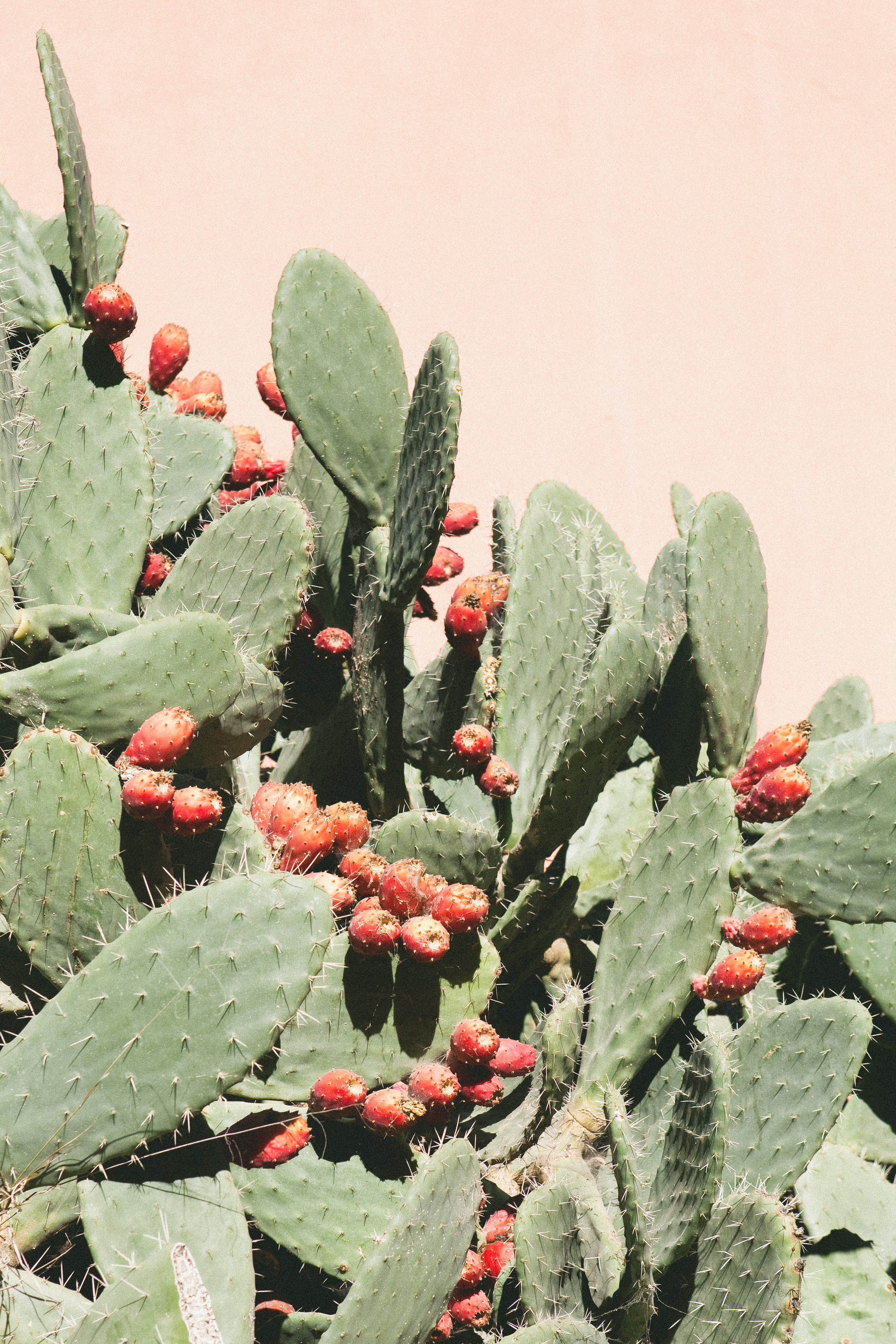 Cactus Extract Is the New Skincare Trend You Should Be Trying Right Now