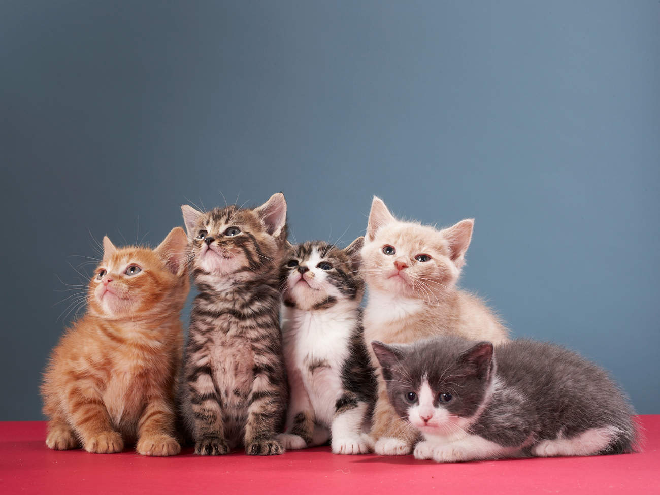 pets-kitten-group-title