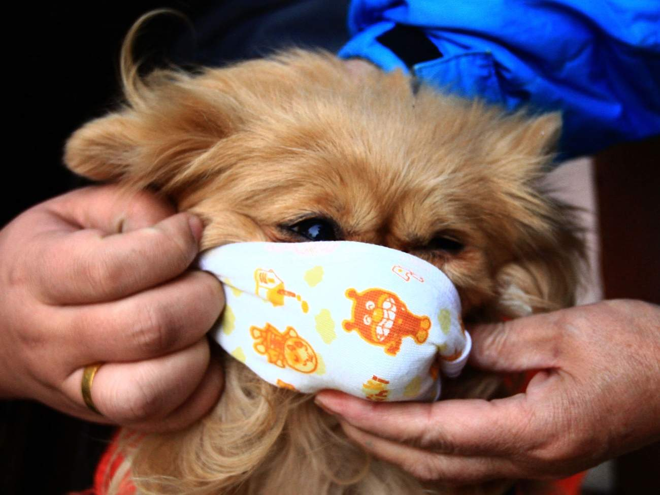 A pet dog wears a mask on a street in Beijing, China, on Dec. 1, 2009.