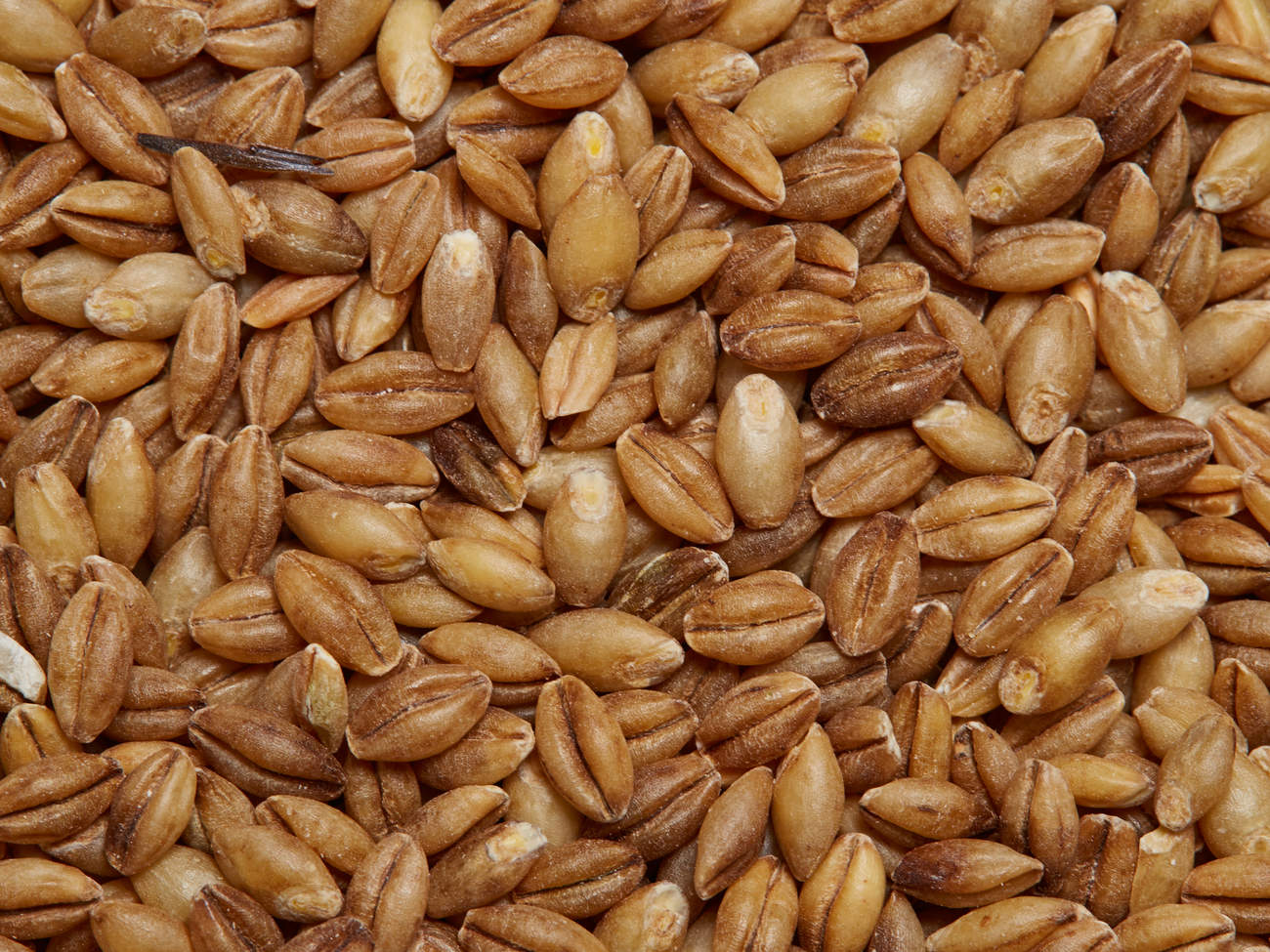healthy and filling, health food, diet, nutrition, time.com stock, barley