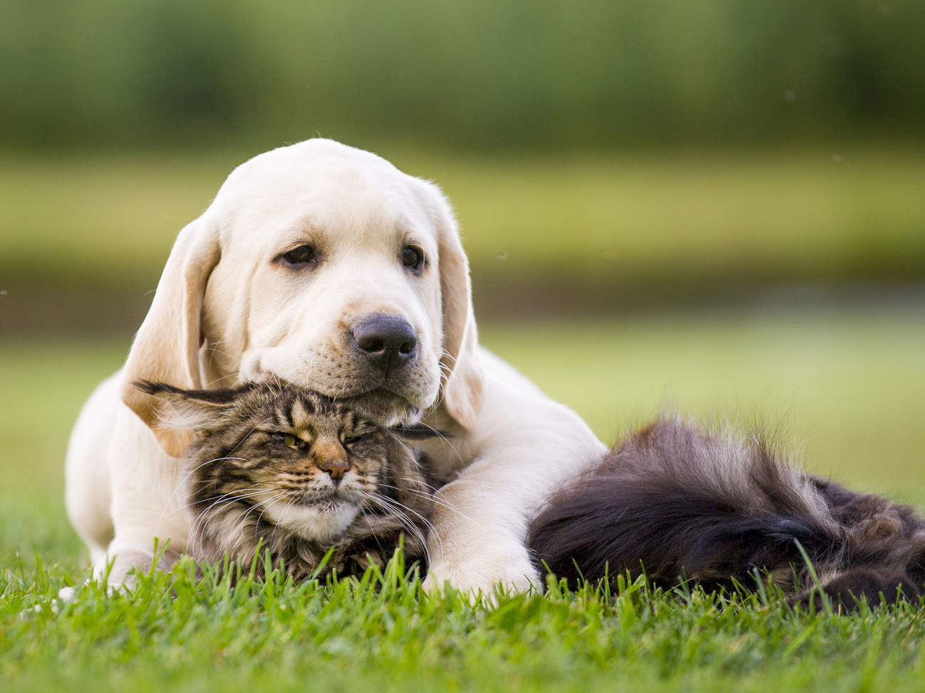 Puppy and Kitten Snuggle