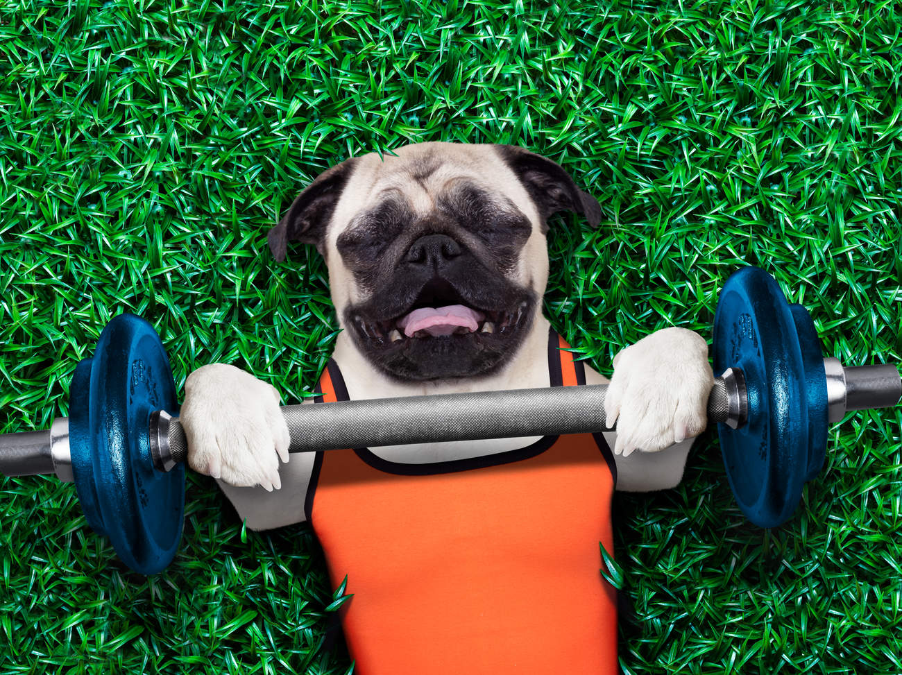 dog-lifting-weights-out-of-shape